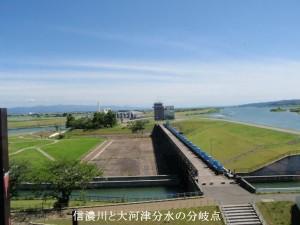 6 信濃川と大河津分水の分岐点